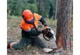 Курсы «Вальщик леса»