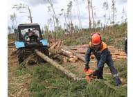 Тракторист на подготовке лесосек, трелевке и вывозке леса